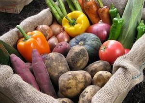无公害果蔬种植区